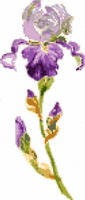 Iris bleau clair, broderie point de croix, cr�ation F�eF�edille