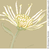 Haïku d'automne: le chrysanthème